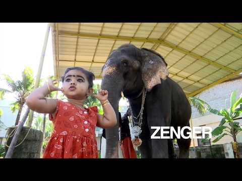 Little girl and elephant develop unlikely friendship