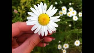 Дни бегут, словно песок сквозь пальцы.. #summer #flowers #ромашки #лето