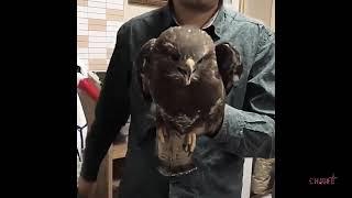 Видео 4 Приколы и смешные видео с собаками кошками котами и другими животными