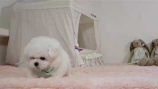 강아지 짖는소리 귀여운 아기 강아지 소리 - 킴스켄넬