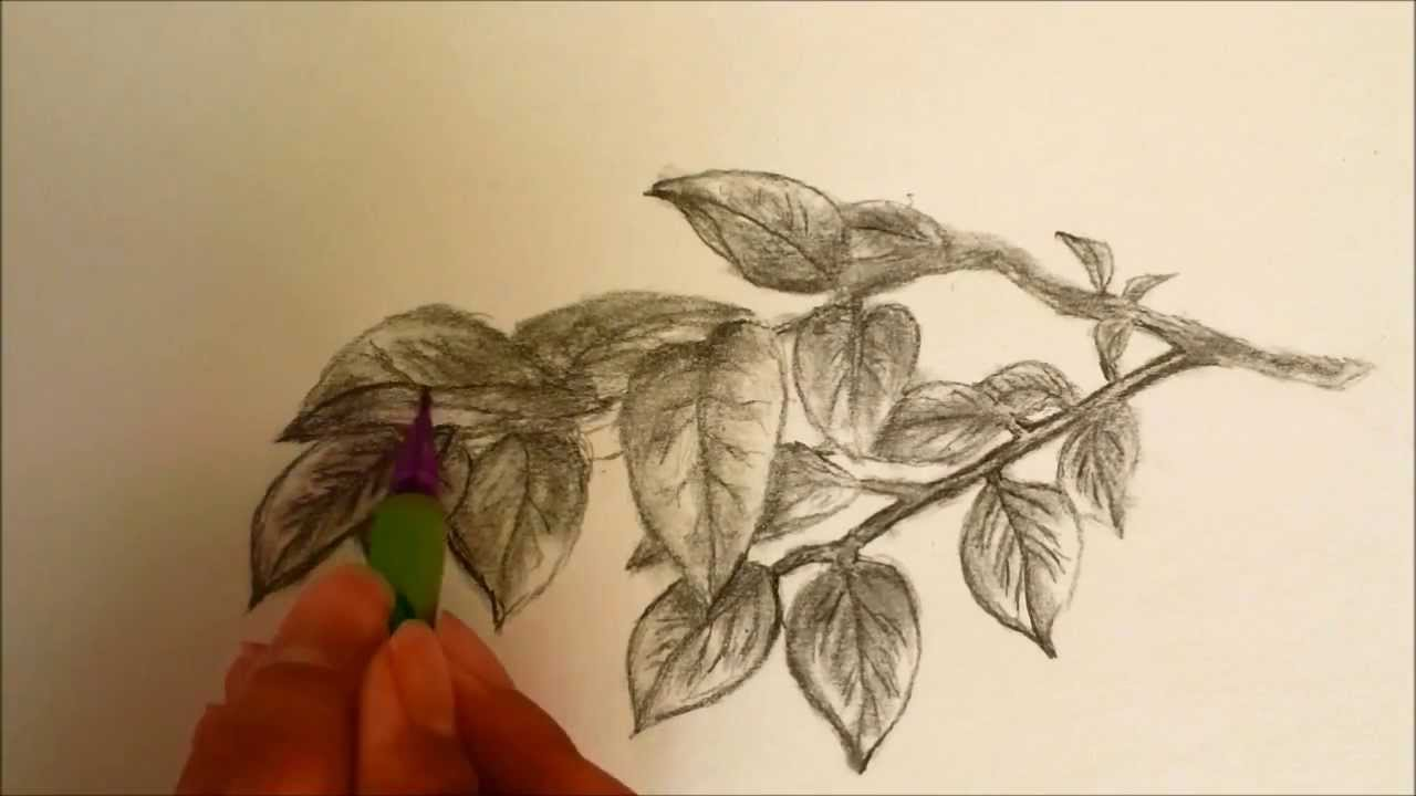 how to draw leaves youtube