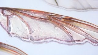 How-To: Transparency Faerie Wings