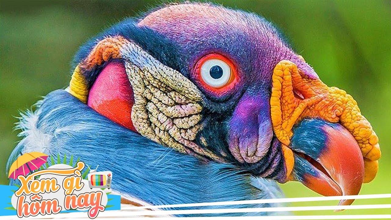 10 Loài Chim Kỳ Quái Không Thuộc Về Trái Đất – Xem Gì Hôm Nay TV