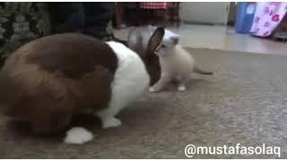 Ukala Kedi Vs Mazlum  Tavşan (Antep dublaj)