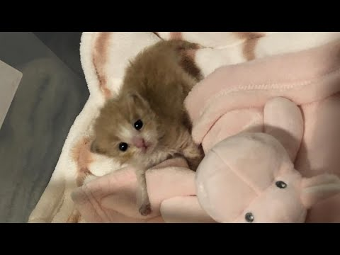Rescue Tiny Kitten All Alone And Scared From The Shelter Became Super Cute And Feisty