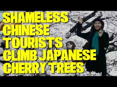 SHAMELESS Chinese Tourists Climb Cherry Trees in Japan for Pictures