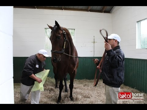 2017 Woodford Thoroughbred | Stallion Show