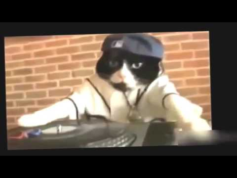 funny dance cat|Funny Dogs Videos|Best Funny Videos