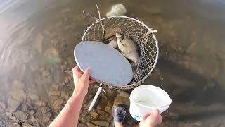 НАЛОВИЛ ВЕДРО КРУПНОЙ РЫБЫ ВОТ ЭТО Рыбалка на донки