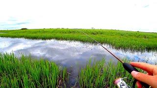 """Рыбалка в 23 км ради """"ЧУДИЩ"""" из ЛУЖИ! Двадцать километров пешком по пойме! Ротан на спиннинг!"""