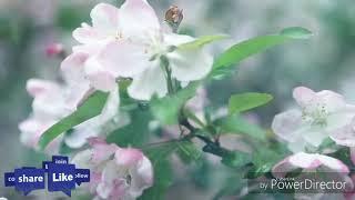 Main agar new video (2018-female version)