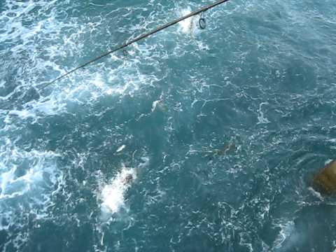 Snook frenzy at juno pier youtube for Juno pier fishing report