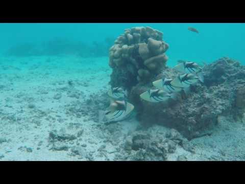 Coles Outdoor Cinema - Rarotonga Part 4   Snorkelling