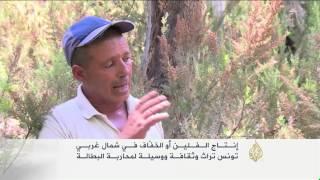 الفلين أهم المنتوجات الغابية بتونس