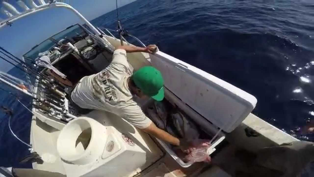 Yellowfin tuna fishing dana point 8 22 15 youtube for Dana point fish report
