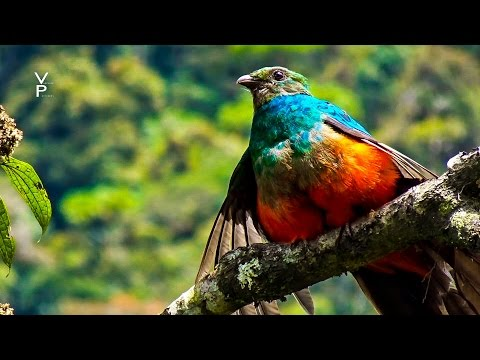 AMAZON JUNGLE. MANU NATIONAL PARK GUIDE TOUR. PERU