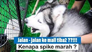 Jalan - jalan ke MALL bareng SPIKE & NALA, TIBA - TIBA ??!!!! - VLOG
