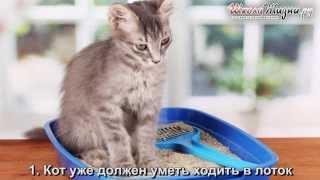 видео Как приучить взрослую кошку к унитазу?