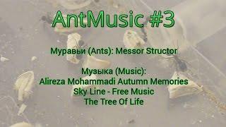 AntMusic #3 Поедание тыквенных семечек