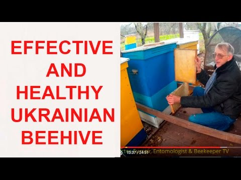 Innovative Beehives of Ukrainian Beekeeper Vasyl Priyatelenk