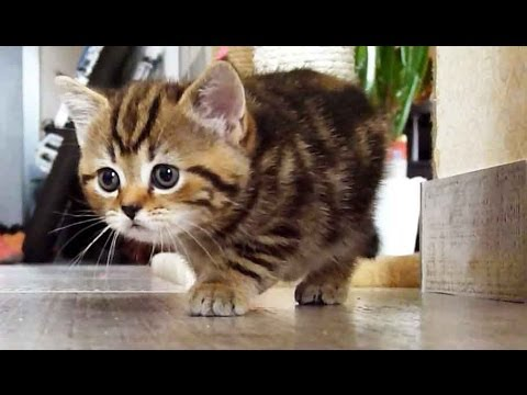Kitten Stalking a Cat
