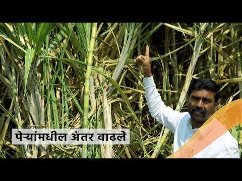 खरे शेतकरी. खऱ्या गोष्टी -  श्री. सचिन विधाते. पीक - ऊस