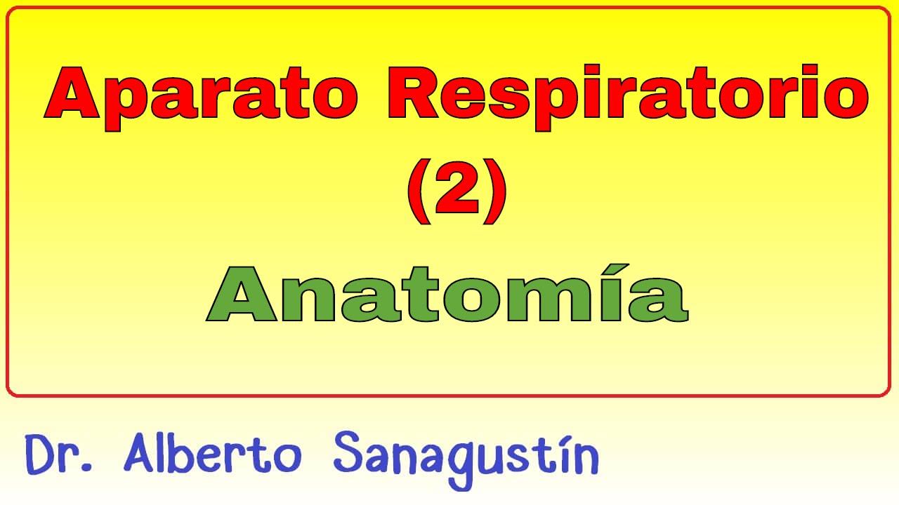 Aparato Respiratorio (2): Anatomía - YouTube