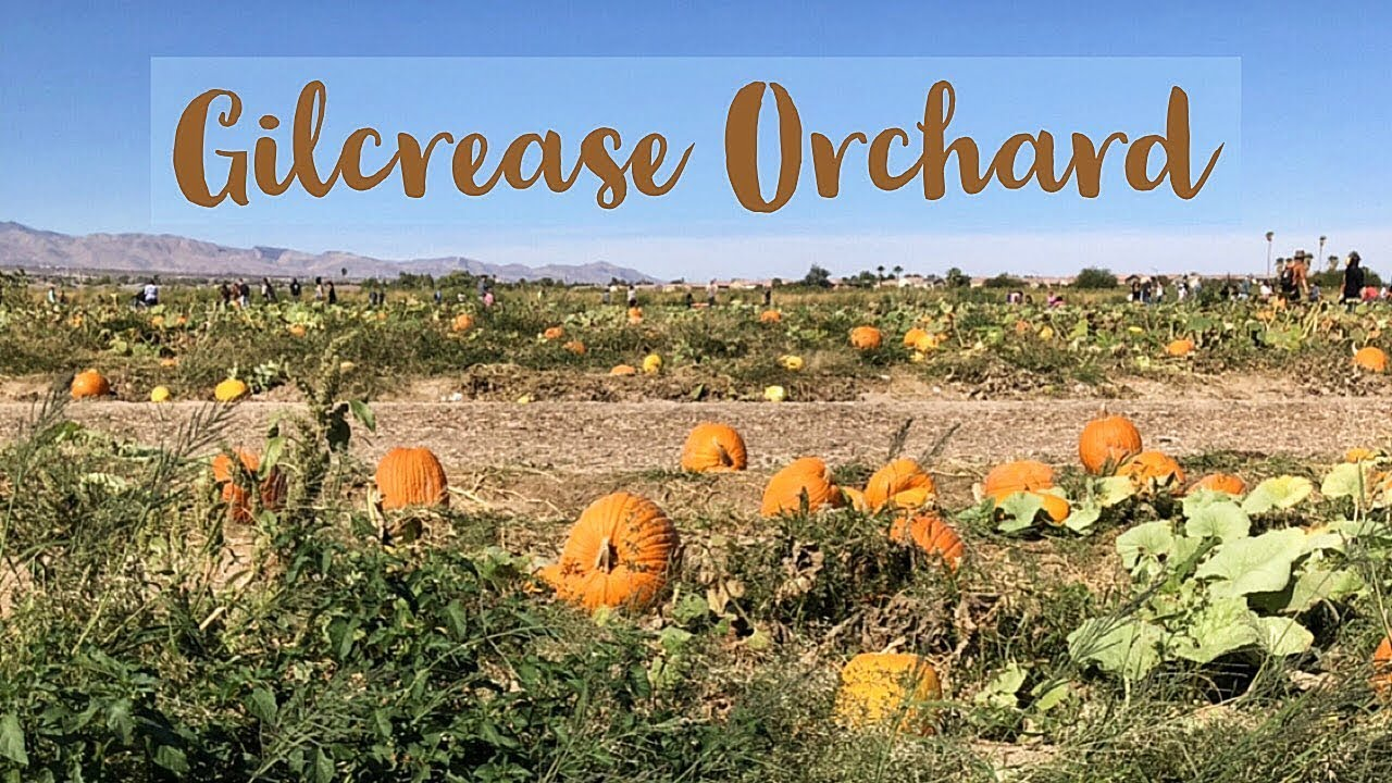 Gilcrease Orchard - Pumpkin Patch 2018 - YouTube