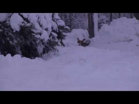 colorado christmas nitty gritty dirt band - Colorado Christmas
