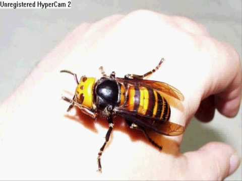 Scary Animals That Are Real Scary Animals M...