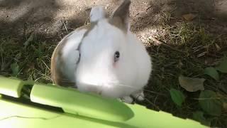 Выгуливаем кота Пушка и кролика Кроша. Сколько у меня животных? ~ Sofia LIVE