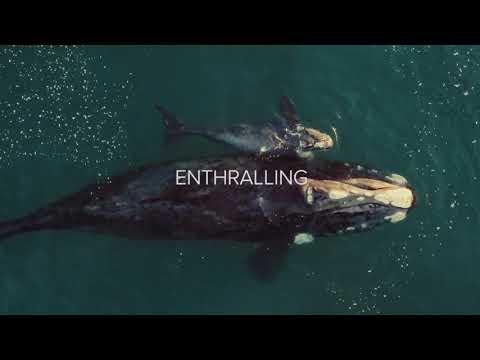 Ocean Film Festival World Tour 2019 Official Trailer AU Mp3