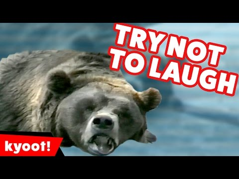 Try Not To Laugh Animal Edition Bloopers of 2016 Weekly Compilation | Kyoot Animals
