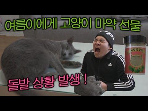 여름이에게 고양이 마약을 선물해주었다.(돌발상황 발생!) - 스팀보이