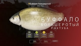 РУССКАЯ РЫБАЛКА 4 - RF4 | БУФФАЛО БОЛЬШЕРОТЫЙ | Р.АХТУБА