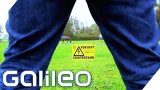 Finde den Lügner - Pinkeln gegen den Elektrozaun |  Galileo | ProSieben