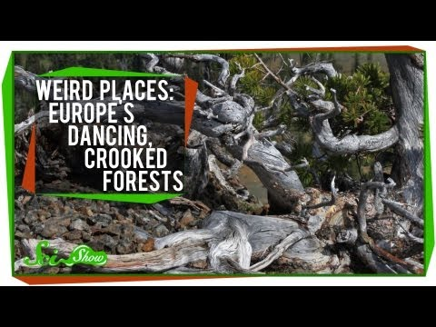 Weird Places: Europe's Dancing, Crooked Forests
