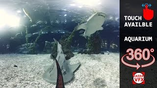 The best aquarium inside 360 degree view vr video and vr movies