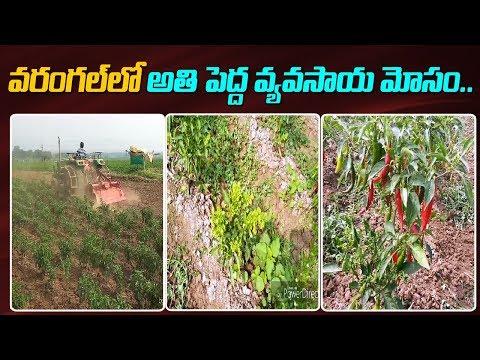 వరంగల్ లో అతి పెద్ద వ్యవసాయ మోసం | Warangal District | ABN Telugu