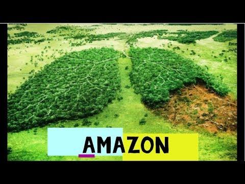 Rừng Amazon – Lá Phổi Xanh Của Trái Đất