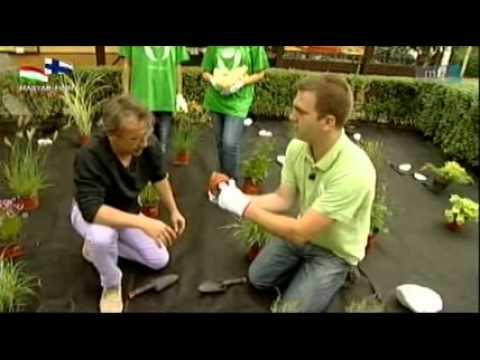 Utcafronti kertépítés: Virágzó Zugló 2011 Program az MTV Kő, papír, olló című műsorában