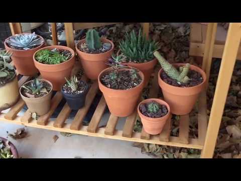 Wind, leaves, rock, succulent, cactus garden equals a mess