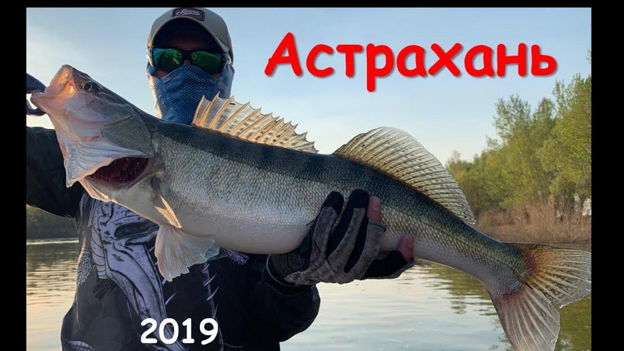 Рыбалка в Астрахани 2019. Зачетные судаки в Никольском!