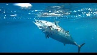 fishing- spinning .ενα ψαρακι στον αφρο. sotos fishing