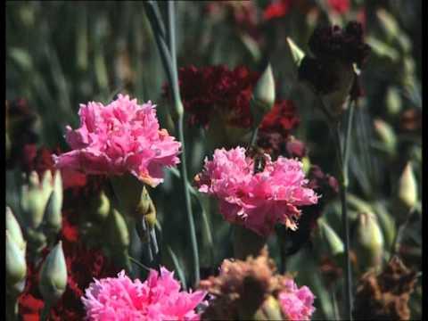 Pas de saison pour les fleurs - C'est pas sorcier