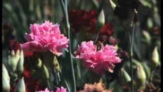 Pas de saison pour les fleurs - C