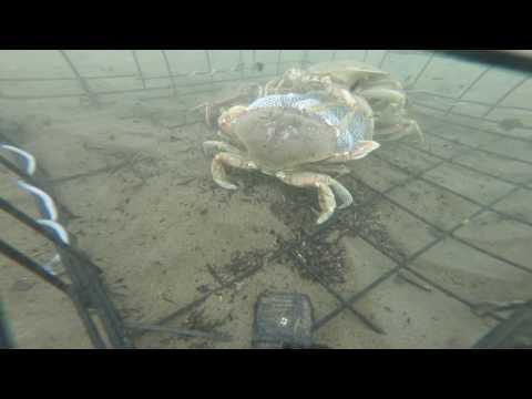 GoPro Underwater Crabbing Tillamook, Oregon Crabbing (Part 1)