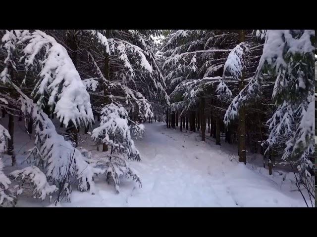 Frozen Forest - by Roberto Manzoli