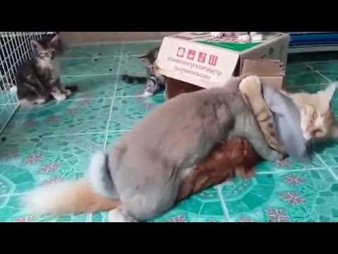 Кролик насилует кота...