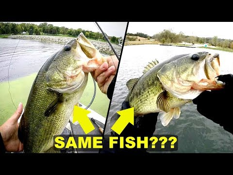 I Caught the SAME FISH TWICE??!! Insanely Cold Day Fishing